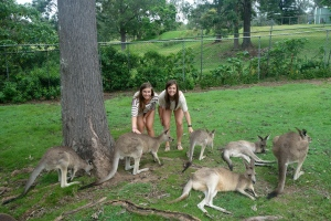 So many roos just chilling!